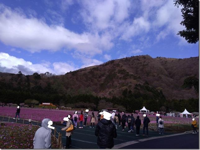 富士芝桜まつり混雑状況画像