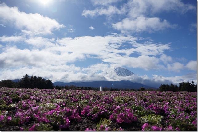 富士芝桜まつり画像